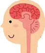 脳を活性化させ、記憶力や集中力を向上させる